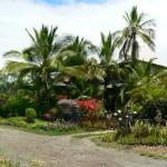 Hawaii2011_1030.jpg